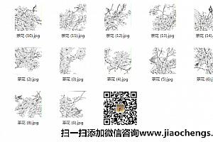 茶花白描线稿百度网盘免费下载白描花卉系列茶花线稿临摹高清jpg绘画素材