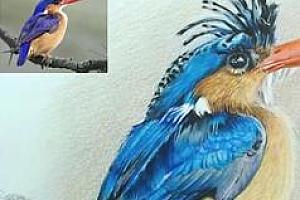 彩铅画动物视频教程_超写实彩铅画动物视频教程百度网盘免费下载观看